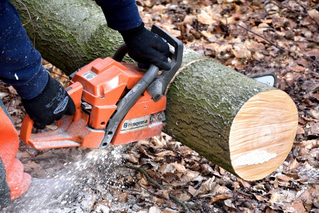 What is the Best Tool to Cut Wet Wood